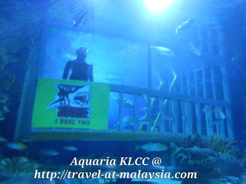 Aquaria Swim with the Sharks