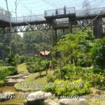 Walking with the birds at Melaka Bird Park