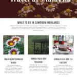 What to do in Cameron Highlands – Infographics