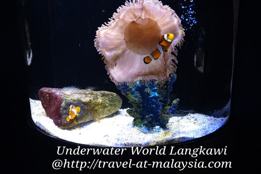 Underwater World Langkawi, Escaping the Sun