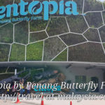 This Time Walking among Butterflies, Entopia Penang.  IN 2020