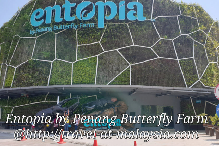 This Time Walking among Butterflies, Entopia Penang.